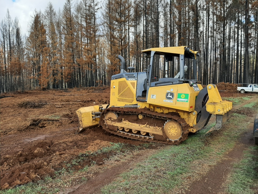 A cat prepping burned Christmas Tree fields for replanting.