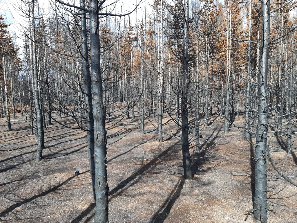 Burnt timber stands in a toasted landscape