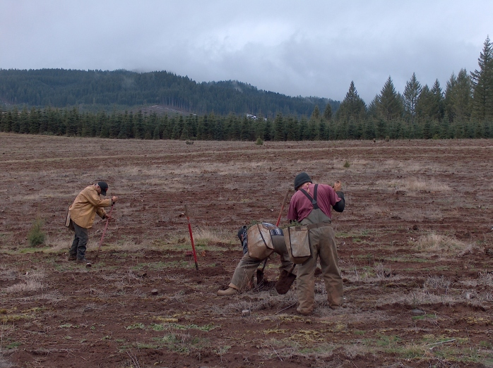 Three people work in a dirt and grass field, planting seedlings. Majestic mountains and trees in the background.